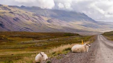 Mazda MX-5 in Iceland - sheep
